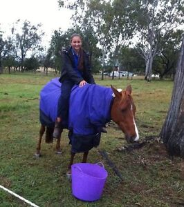 13.2h Chestnut Mare Boonah Ipswich South Preview