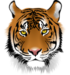 solutions-tiger-informatique