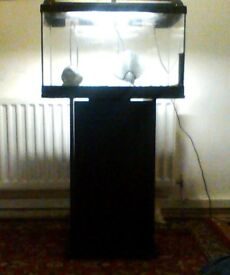 35L Fish Tank with Standing Unit (OPEN TO OFFERS)