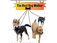 Professional and fully insured pet sitter/dog walker