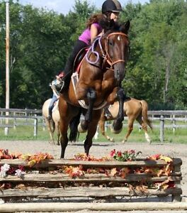 15.2-3h Gelding for lease