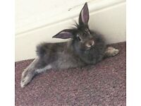 8weeks old baby rabbits for sale