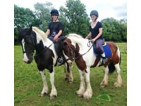 Fantastic horse riding opportunity based in Arborfield - Berks