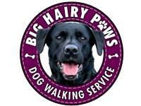 Dog Walker - Big Hairy Paws dog walking service