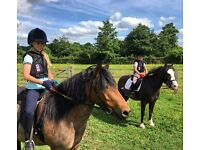 2 super children's ponies available for share/part loan in Arborfield