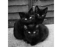 Well grown kittens