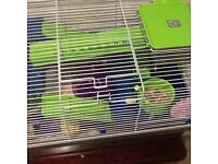 Dwarf Hamster, 2 cages and various related items
