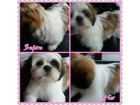 L Jay's Dog Grooming