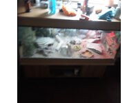 bearded dragon with vivarium and stand berdeddragon is 3 year old