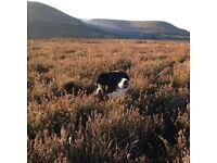 Daniel's dog walking- Your dog can be walked on and off the lead dependent on your requirements.