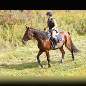 Big, solid gelding for part board
