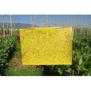 10x Large Area Yellow Sticky Flying Insect Pest Glue Traps Catcher Fly Bugs Wasp