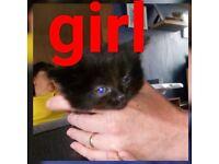 5 kittens £30 each