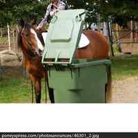 entrainement / debourrage chevaux