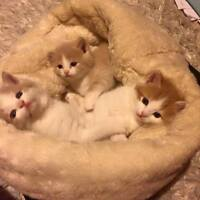 2 Free kittens to good home