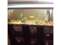 Fish for sale 26