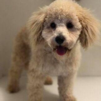 Jims dog wash langwarrin grooming gumtree australia frankston little pooches dog grooming solutioingenieria Image collections