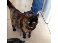 Loving cat looking for a forever home - free
