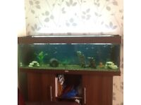 Four foot fish tank with unit approx 200 litres