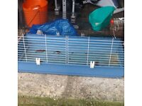 Indoor extra large gineau pig/ rabbit cage