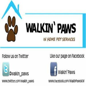 Professional Dog Walking & Pet Sitting Services Kitchener / Waterloo Kitchener Area image 4