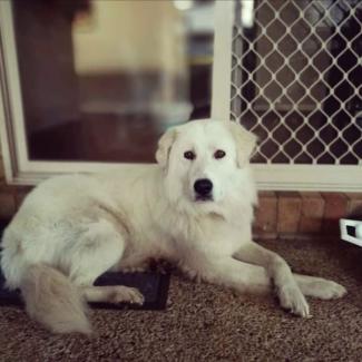 Wanted: Man and Dog Need Rental