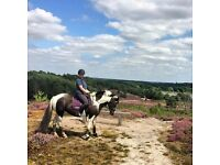 Millie 14.3hh 6yo fun all-rounder for Share in Arborfield