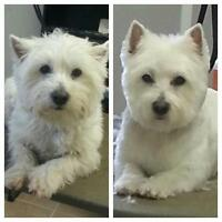 Dog Groomer Accepting New Clients-small dogs