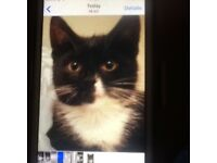 CAT MISSING FROM SUMMERFIELD PLACE, BIRCHGROVE