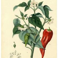 Spring clean up with Little Chili Pepper