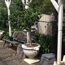 MULTIPLE PLANTS FOR SALE Flagstaff Hill Morphett Vale Area Preview