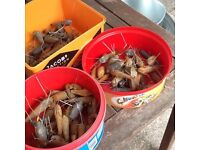 Tub of plain used sea fishing weights approx 30