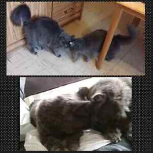 Looking for forever home or foster home. Kitchener / Waterloo Kitchener Area image 1