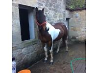 Horse for share 2 days pw.