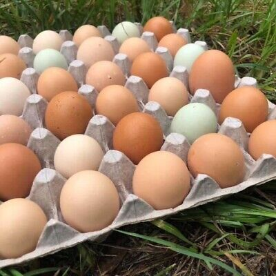 2 Dozen Rare Breed Chicken Hatching Eggs. Marans Olive Eggers Silkie Frizzle