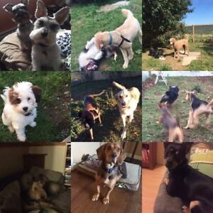 Pet sitter- quality care at home