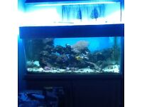 4x2x2 marine tank with sump and equipment