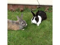 Pair of rabbits for sale (price is for both together )