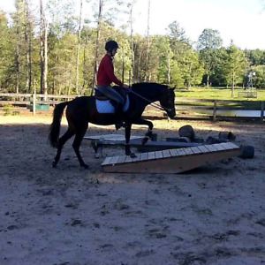 Lovely large pony for part board