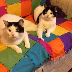 Two Adults Cats Needing new home FREE