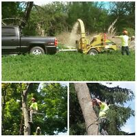 Tree Services & Shrub Care
