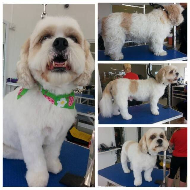 Dog Grooming Vans For Hire