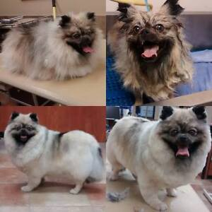 In-home dog grooming! & BOARDING