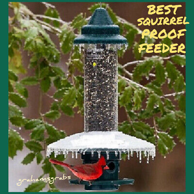 BROME SQUIRREL BUSTER PLUS WITH WEATHERGUARD BEST SQUIRREL PROOF BIRD