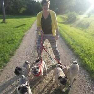 Pet sitter/Dog walking/House Sitting