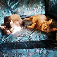 Mother and daughter cats need a good home
