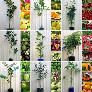 Assorted Fruit Trees From $6 each Plants