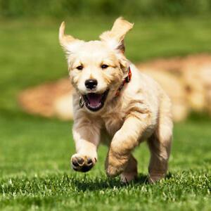 Pet sitting/dog walks available!