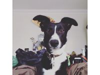 Looking for a dog-friendly room to rent in a Cambs house share :)