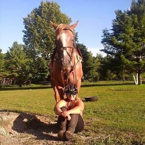 Actively looking for a part board or lease for my 2 mares Peterborough Peterborough Area image 8